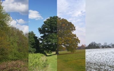 Verslo sezoniškumas – kaip vystyti verslą esant sezoniniams ciklams